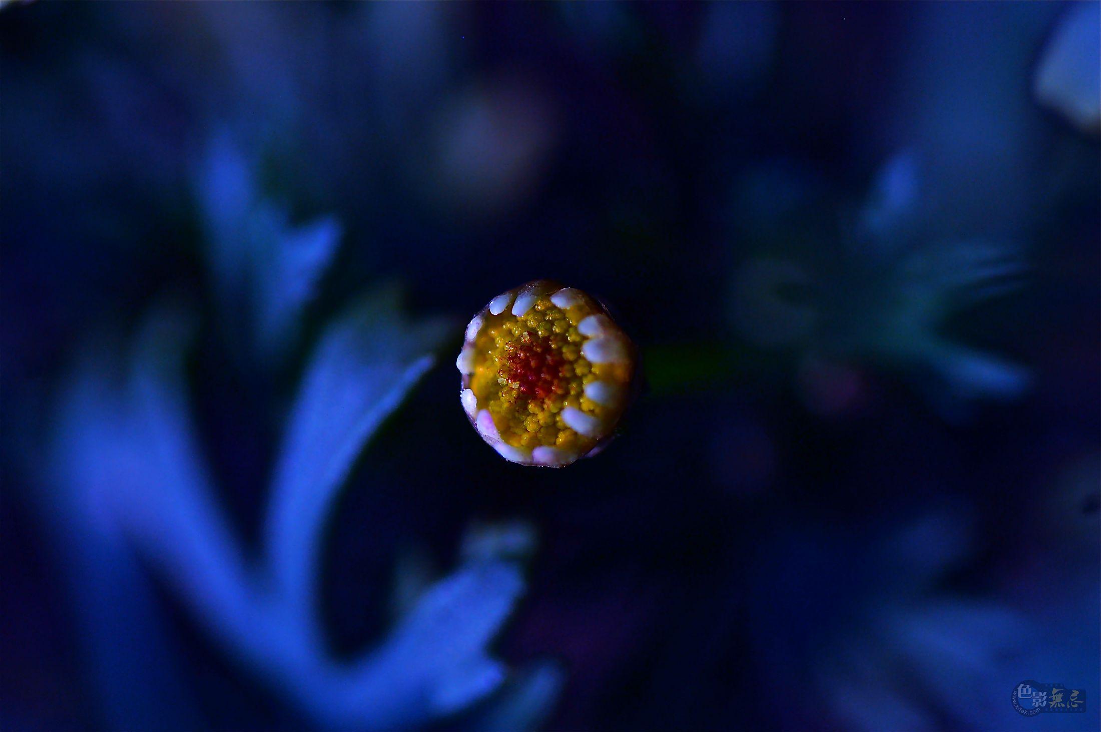 弦听作品:梦之花