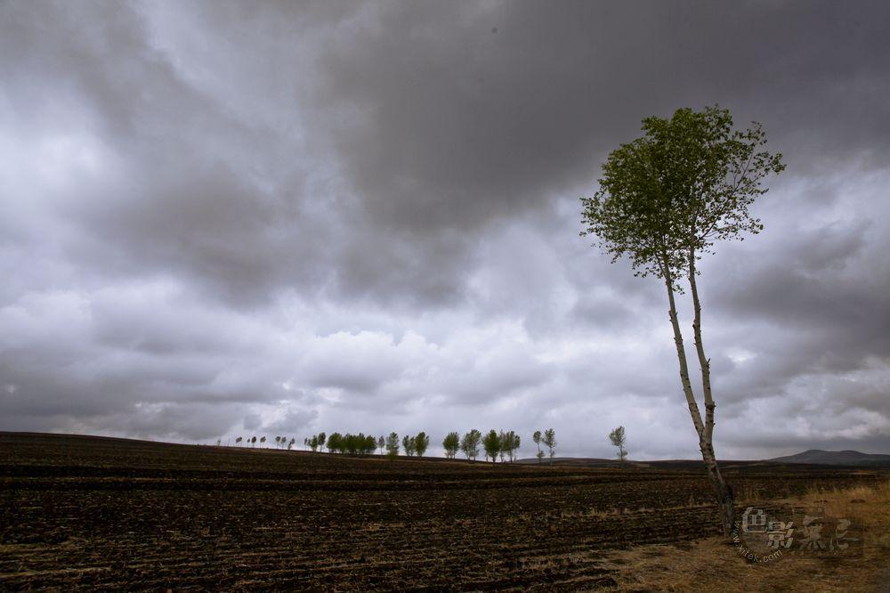 东力传动作品:原野上的树