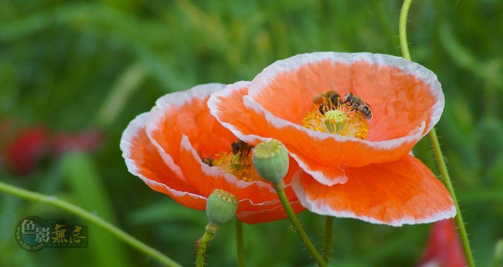 kevin060作品:蜂花