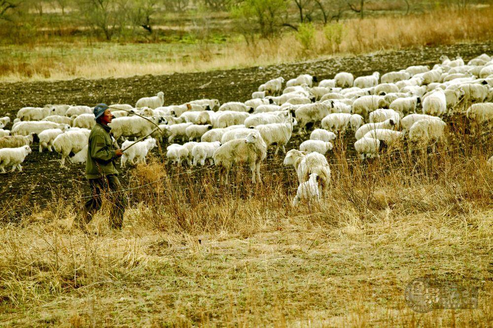 东力传动作品:牧羊图