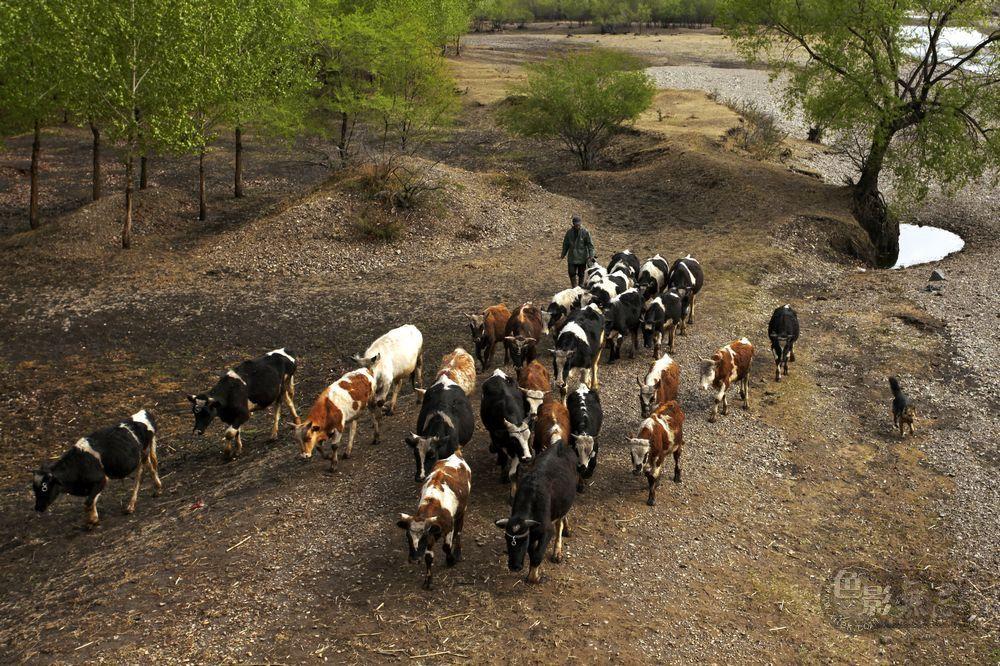 东力传动作品:牧牛图