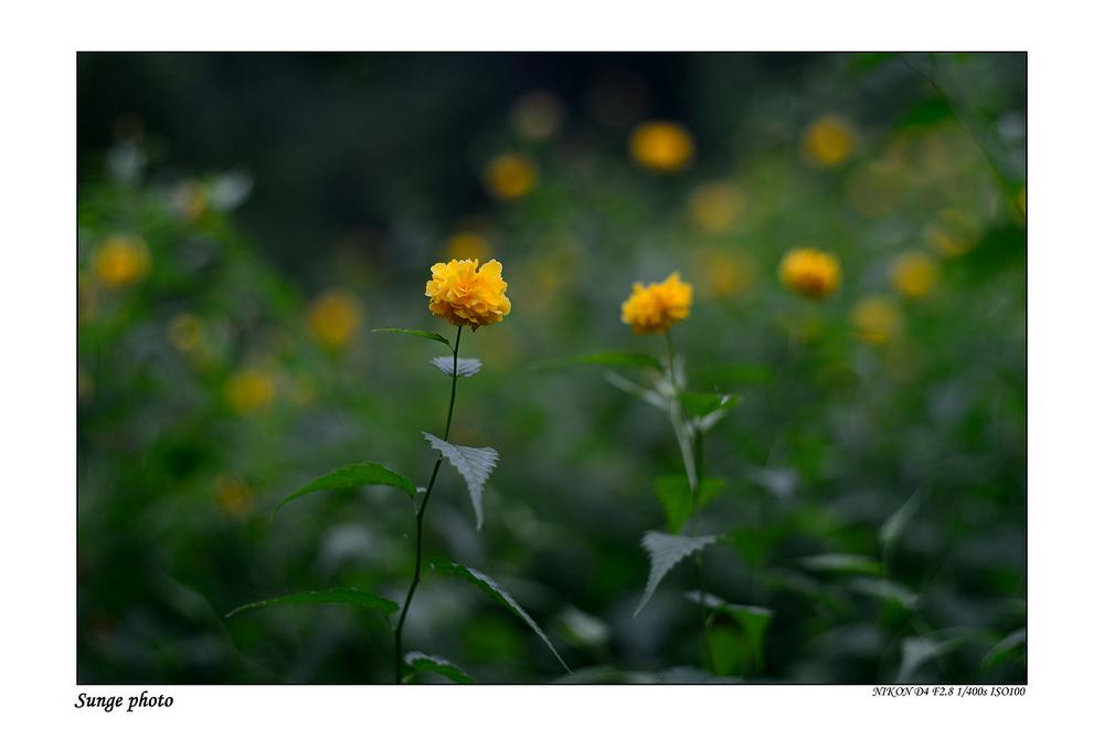 sunge作品:花卉集锦