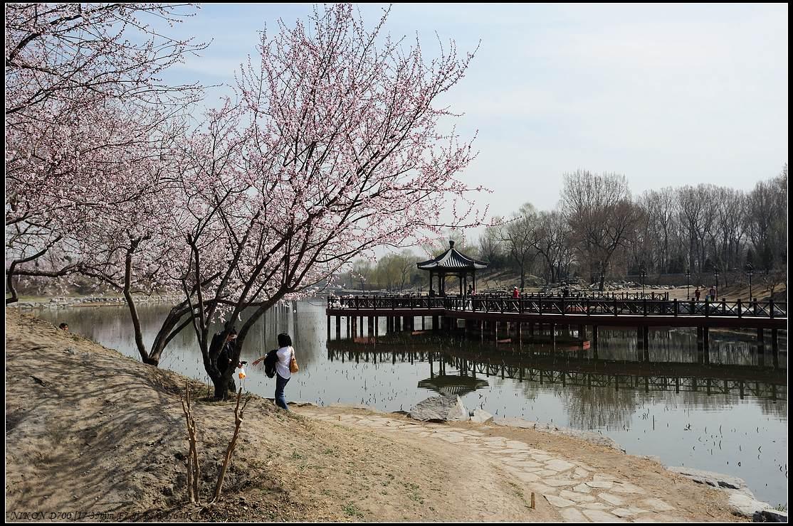sunge作品:2011年的圆明园春季