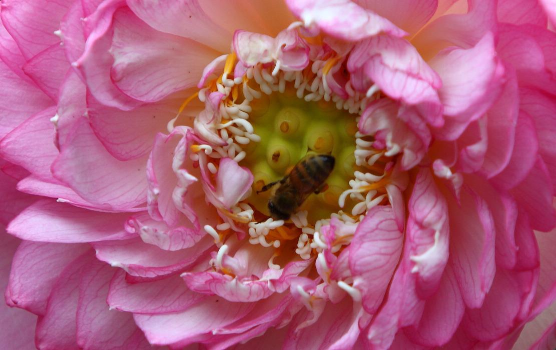 顺顺0414作品:蜂  花