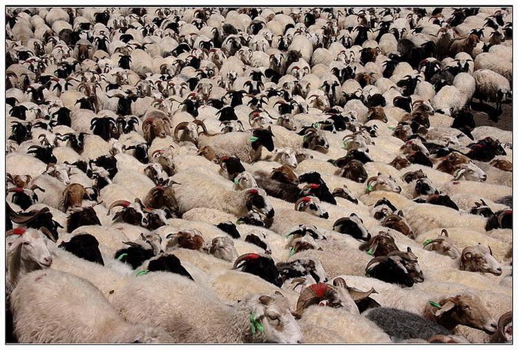 观雾山人作品:喜羊羊