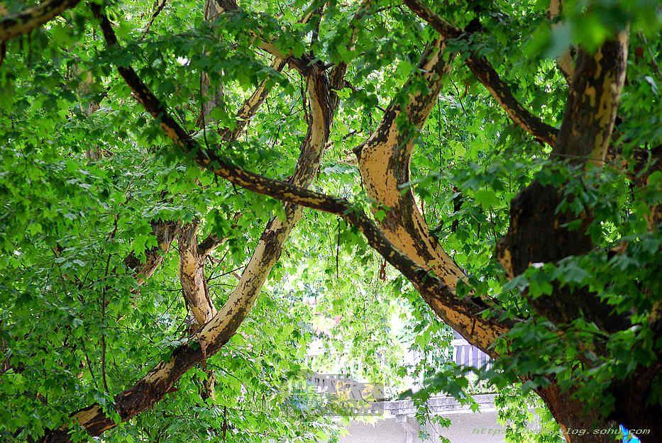 白雪摄影作品:枝繁叶茂