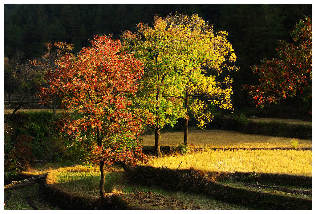 zfn64作品:秋的色彩记录(1)