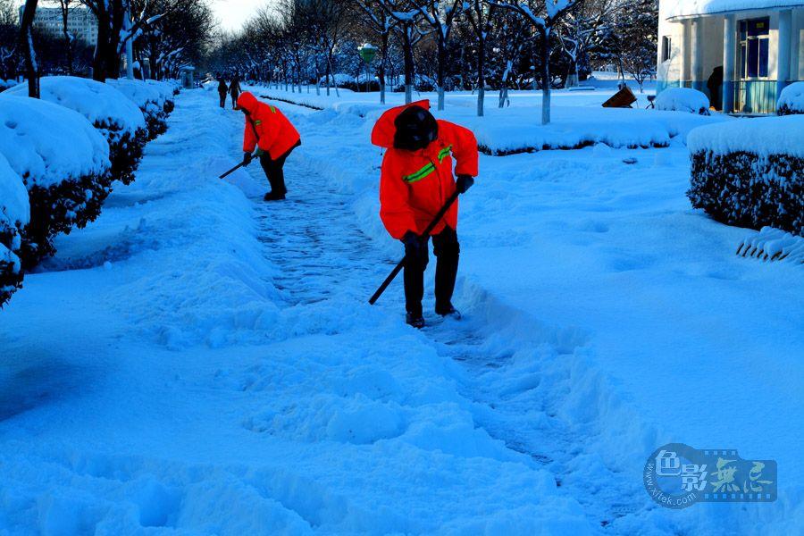 柞树林作品:与雪奋战