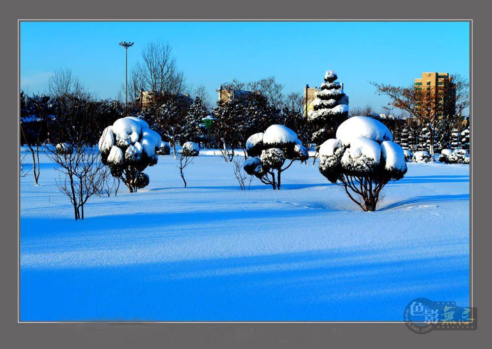 柞树林作品:雪后的景色-1