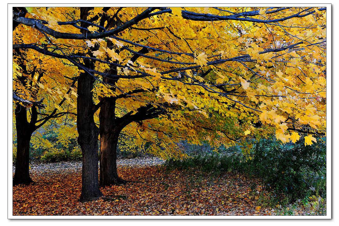 大地旋风作品:秋上枝头