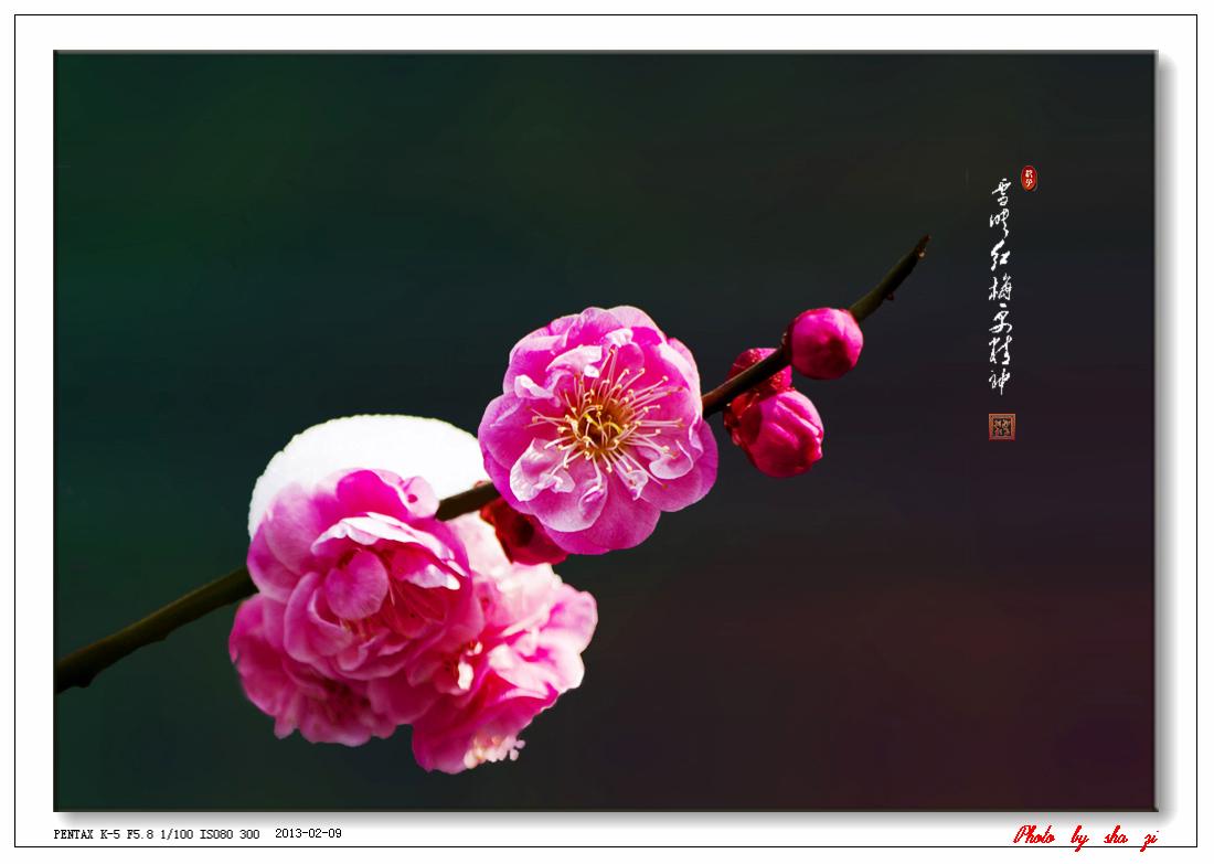沙子2012作品:雪映红梅更精神