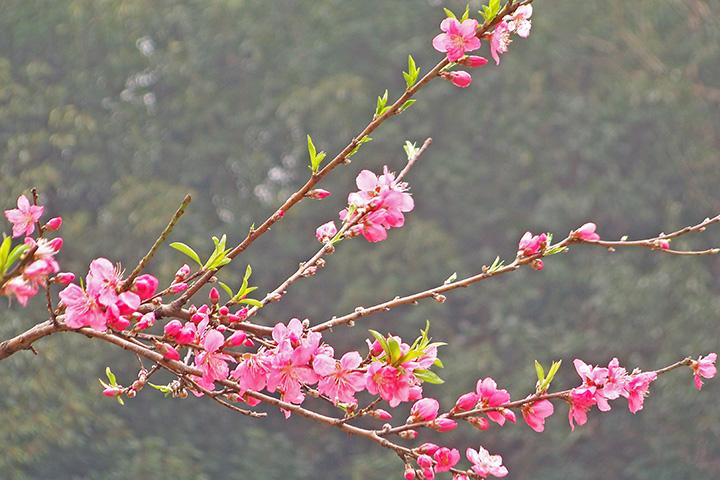 人在草木间摄影作品 桃花朵朵开