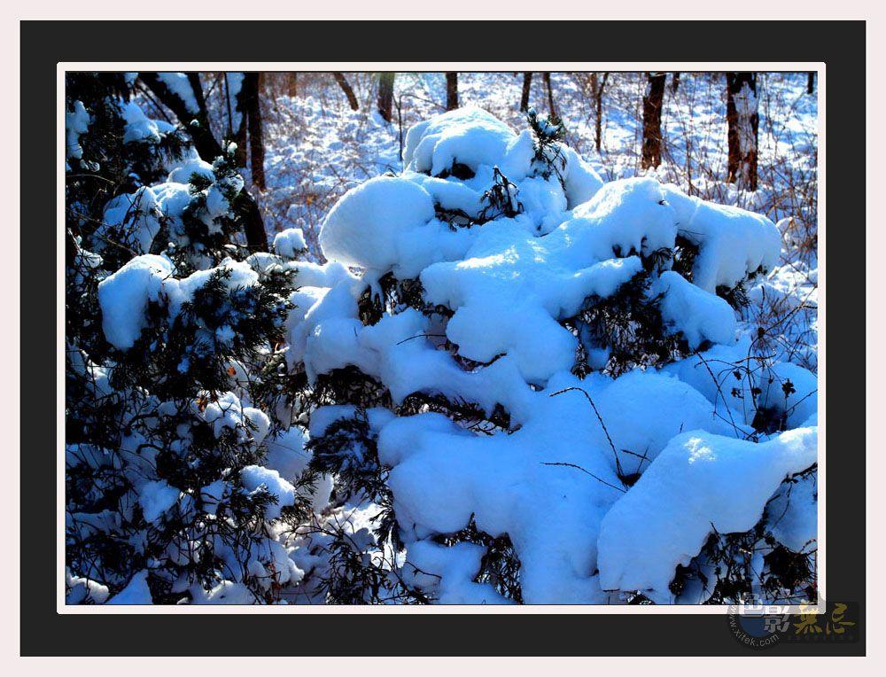 柞树林作品:雪后的景色-7