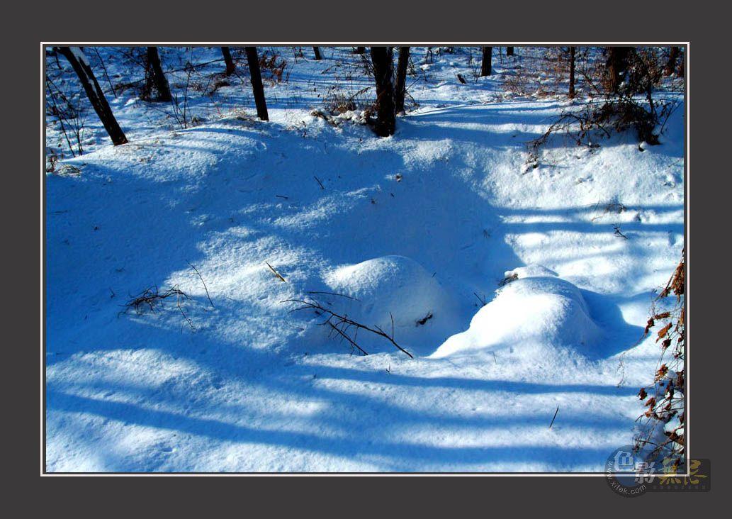 柞树林作品:雪后的景色-9