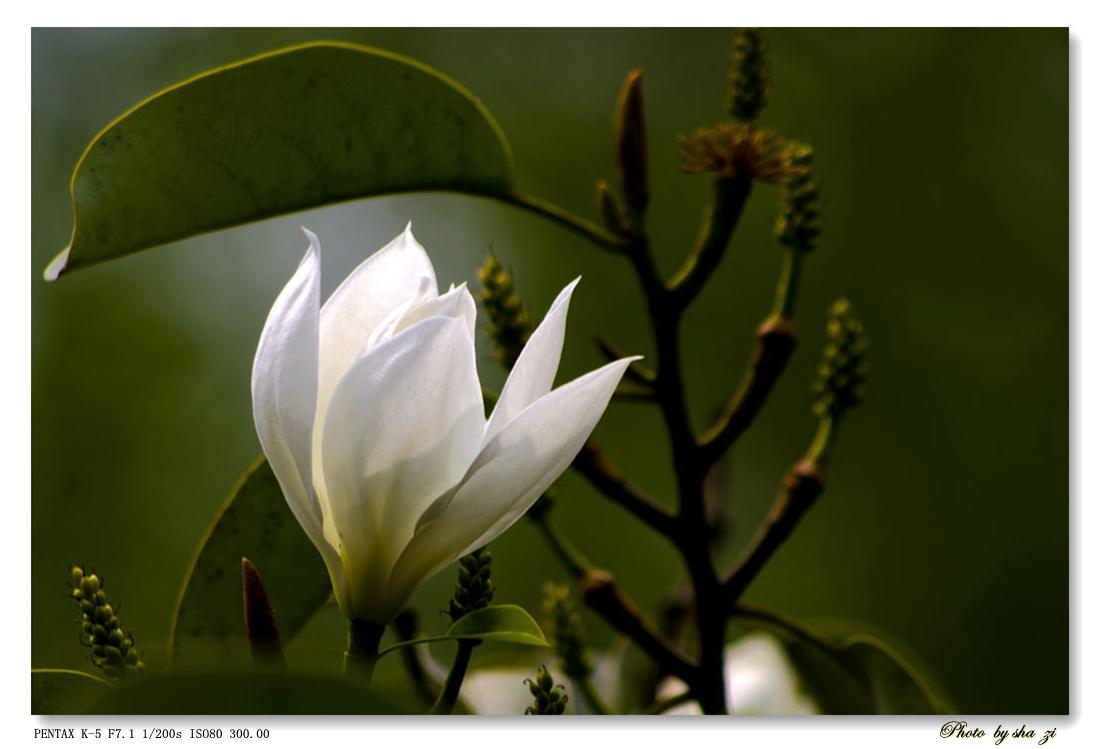 沙子2012作品:洁白花朵寄哀思 -- 为雅安祈福!