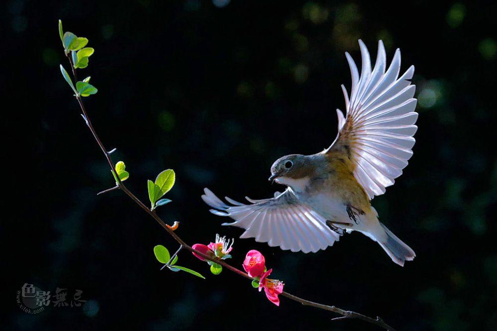 王哥58作品:小鸟捕食