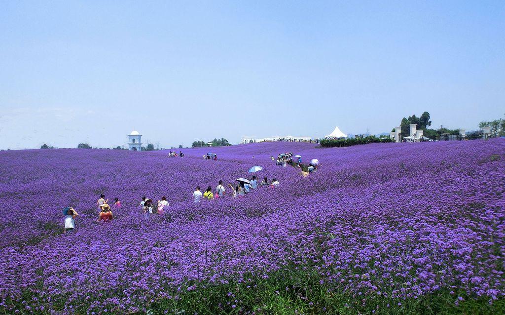 言身村的羊群作品:紫色香薰