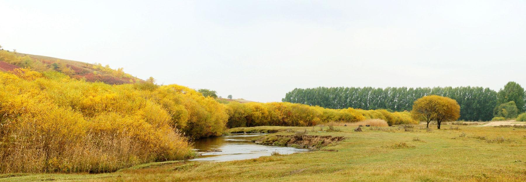 炫光智影作品:金色的秋天