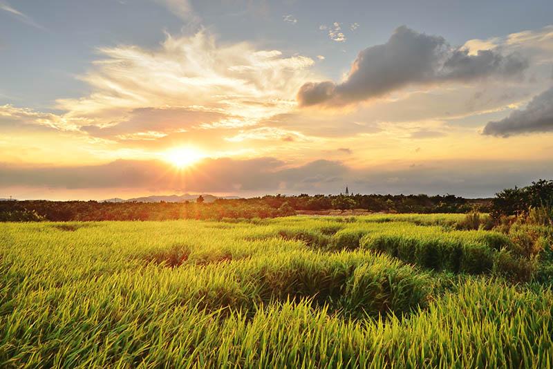 安粮作品:这么一块稻田