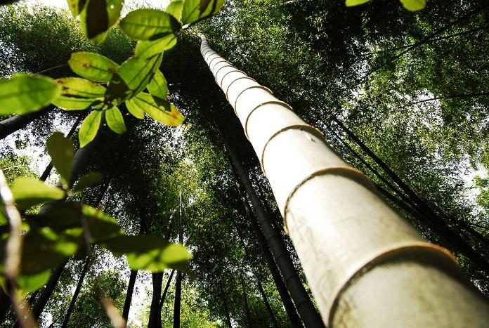 影随心333作品:竹