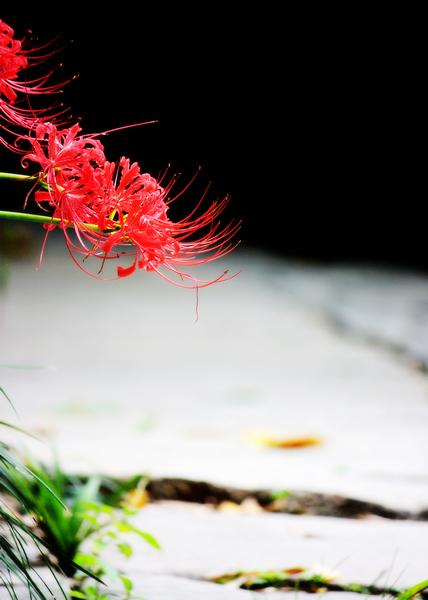 天堂里的小木屋作品:地狱之花