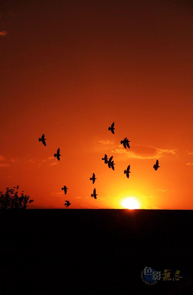 Enochina作品:夕阳与飞鸟