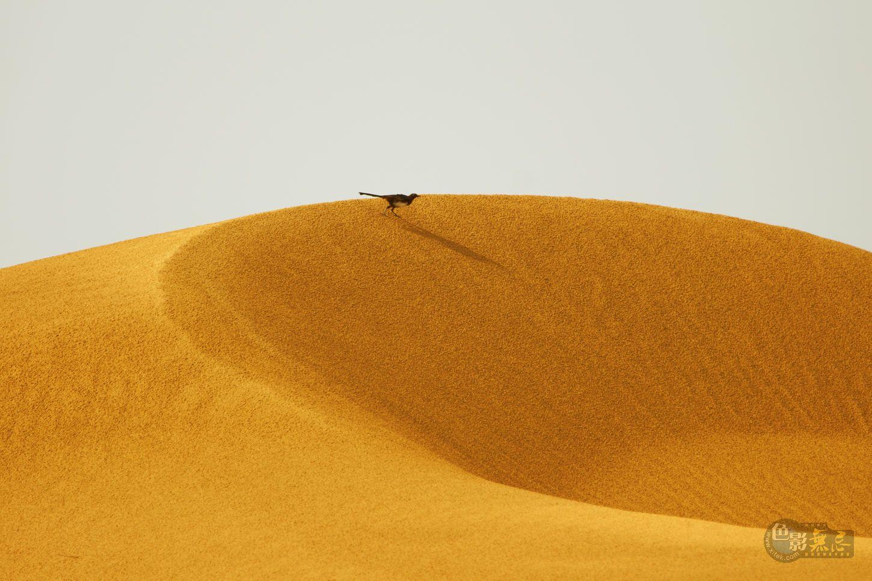 bucy090作品:沙漠精灵