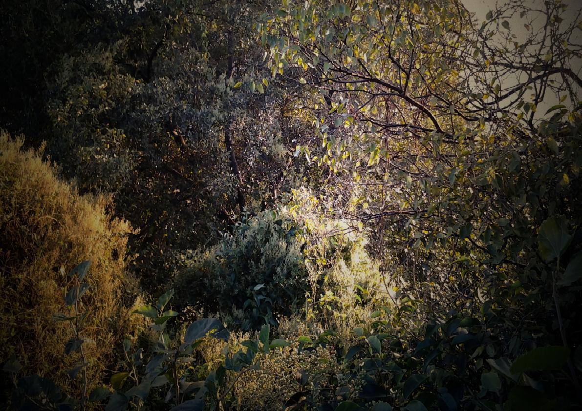 jinz18作品:大蜀山森林之光