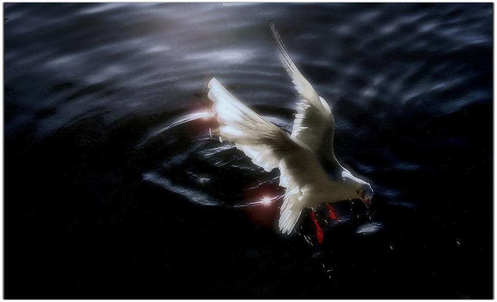 飞龙在天118作品:翠湖海鸥