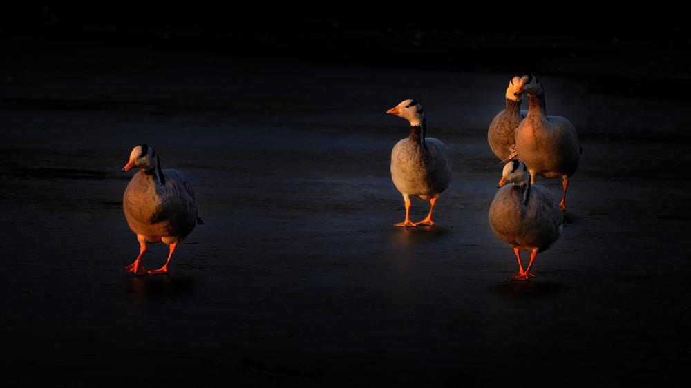超新星作品:夕阳漫步