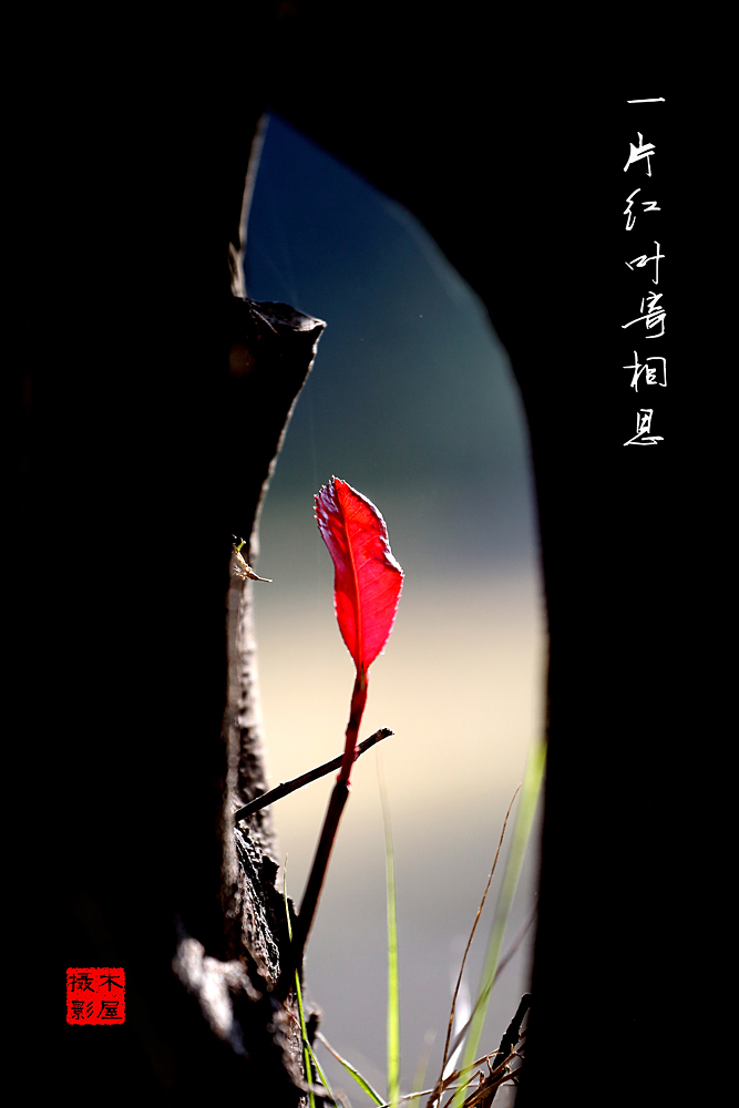 天堂里的小木屋作品:一片红叶寄相思