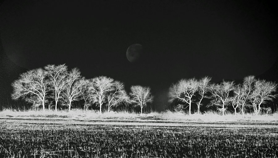 雀风影作品:雪后夜野印象