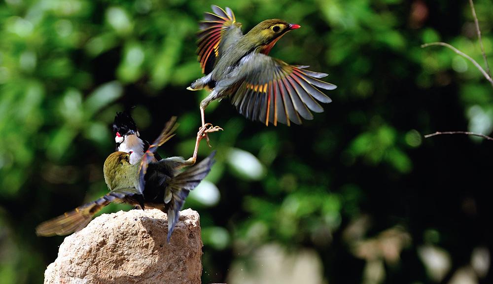 高林作品:公园拍鸟