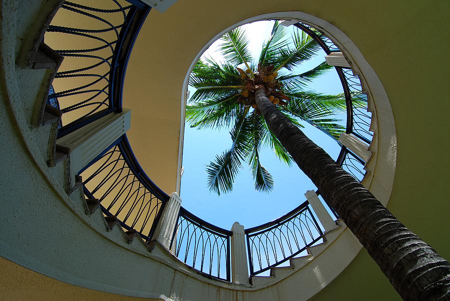 柒郎作品:一颗椰子树