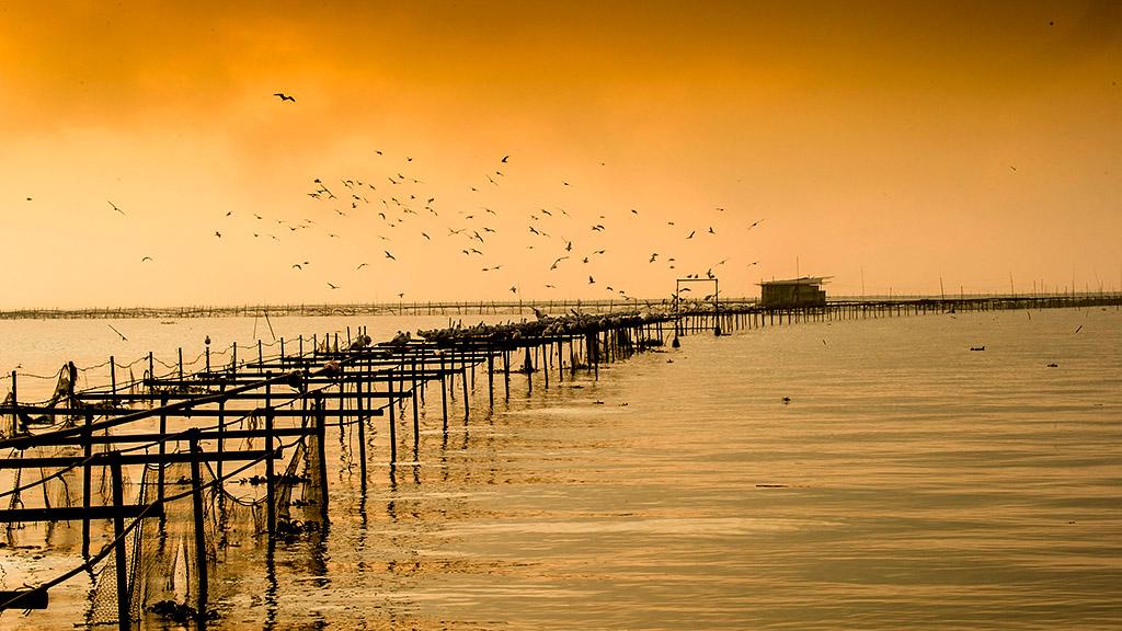 尧木作品:海鸥家园