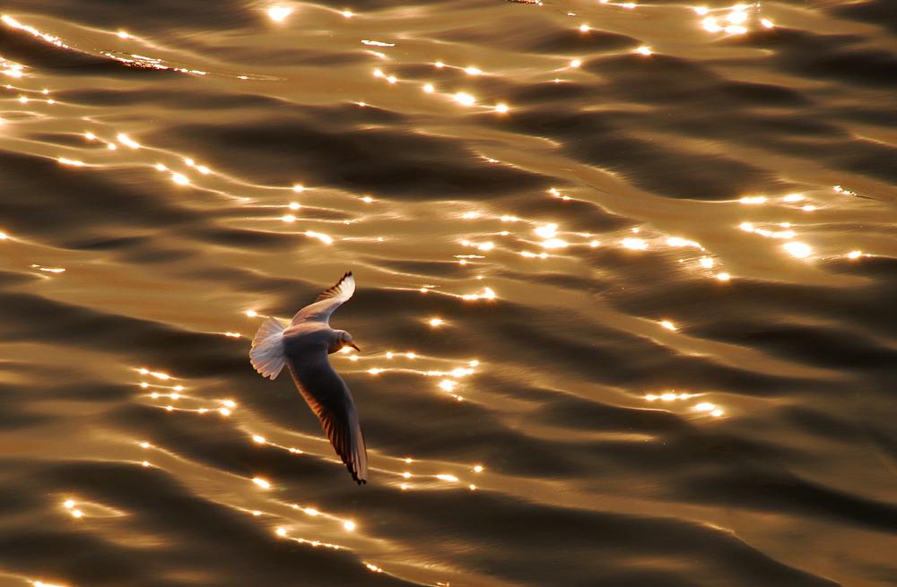 春光明媚作品:海鸥