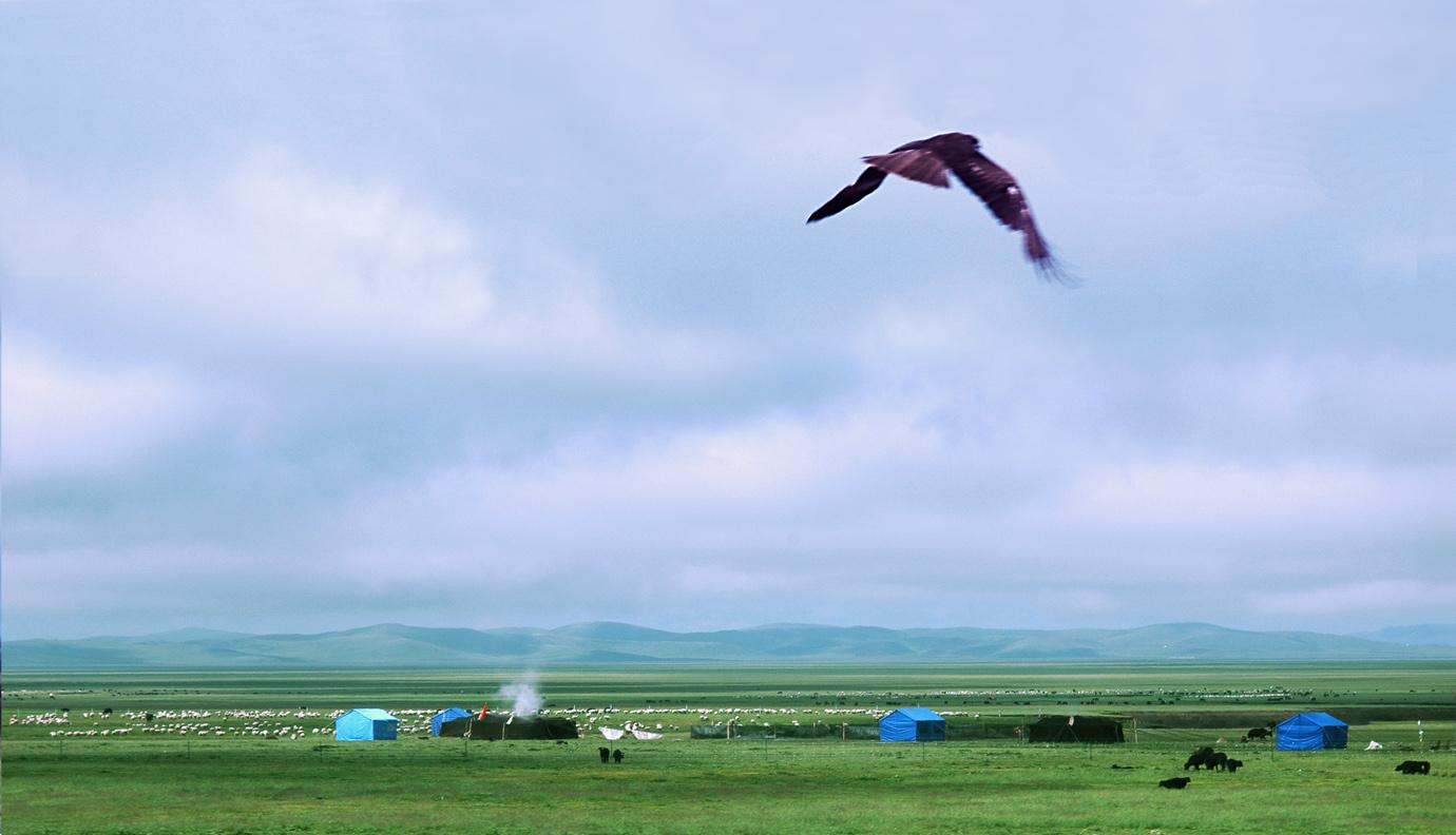新摄影的胖老头作品:草原鹰