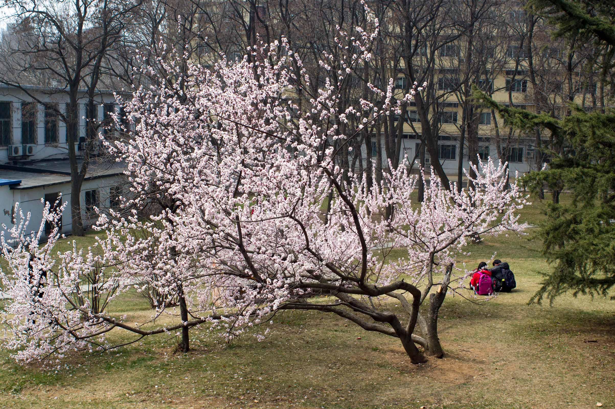 ydscn作品:春来校园