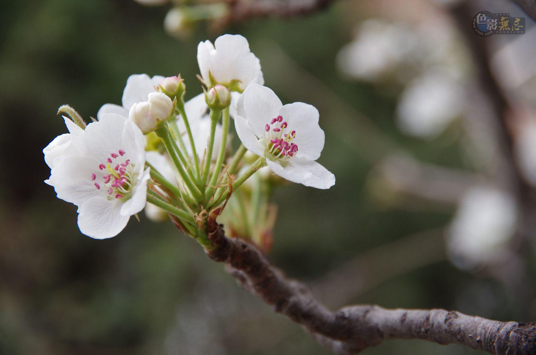 愤怒的沙漠作品:又见春天