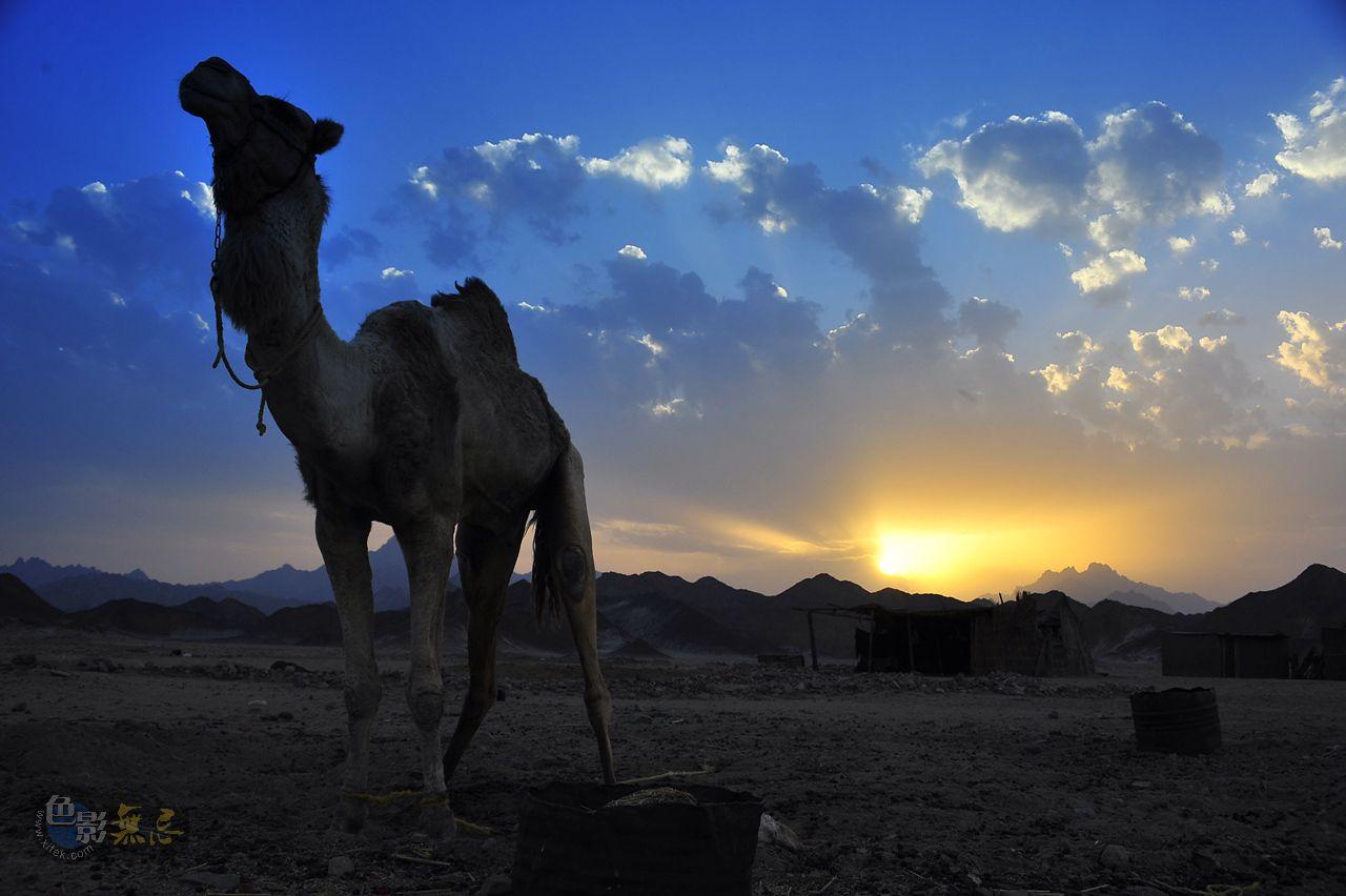 山雨朦胧作品:沙漠战士