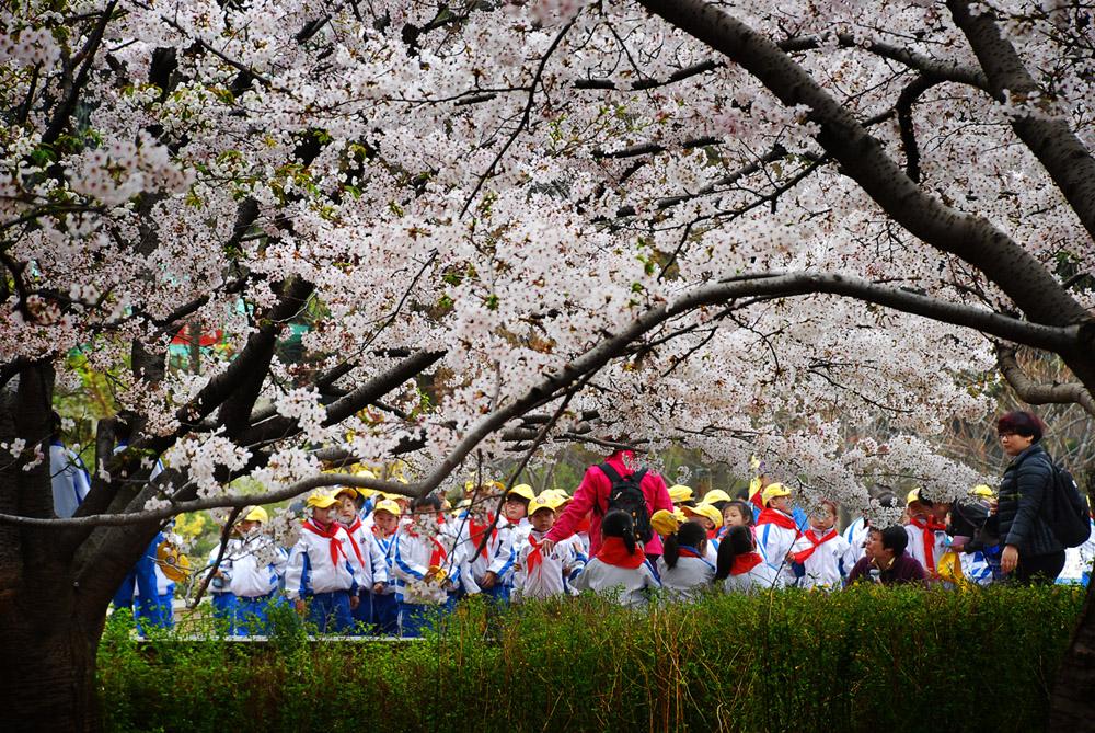 春光明媚作品:春季的花