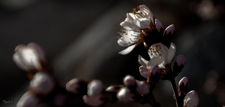 张鹏5386作品:花与影
