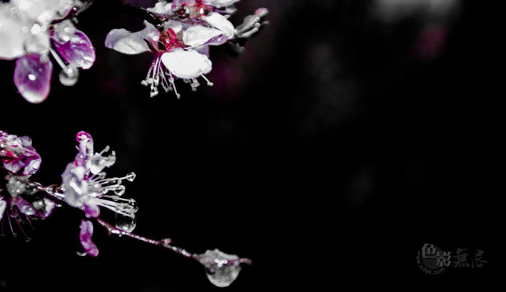 张鹏5386作品:雪,冰,花