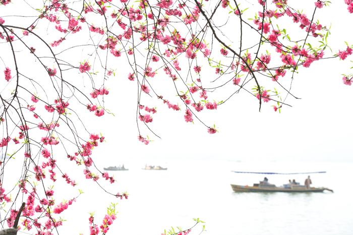 yjhff作品:西湖边的桃花