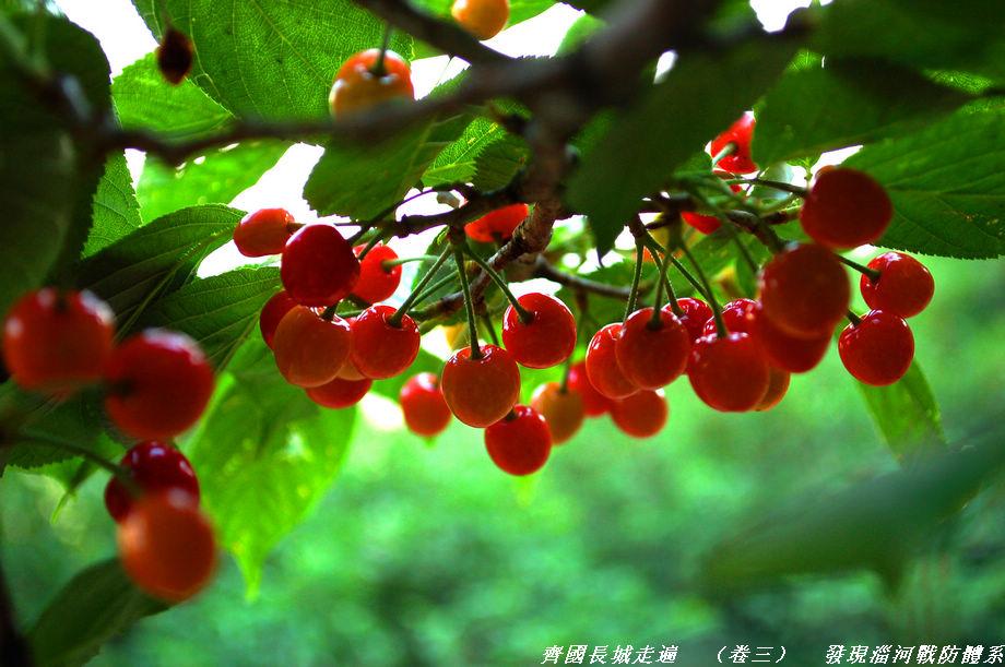 山东山作品:樱桃熟了