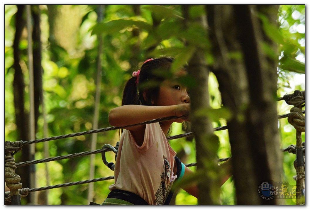 落叶麻雀作品:冒险树