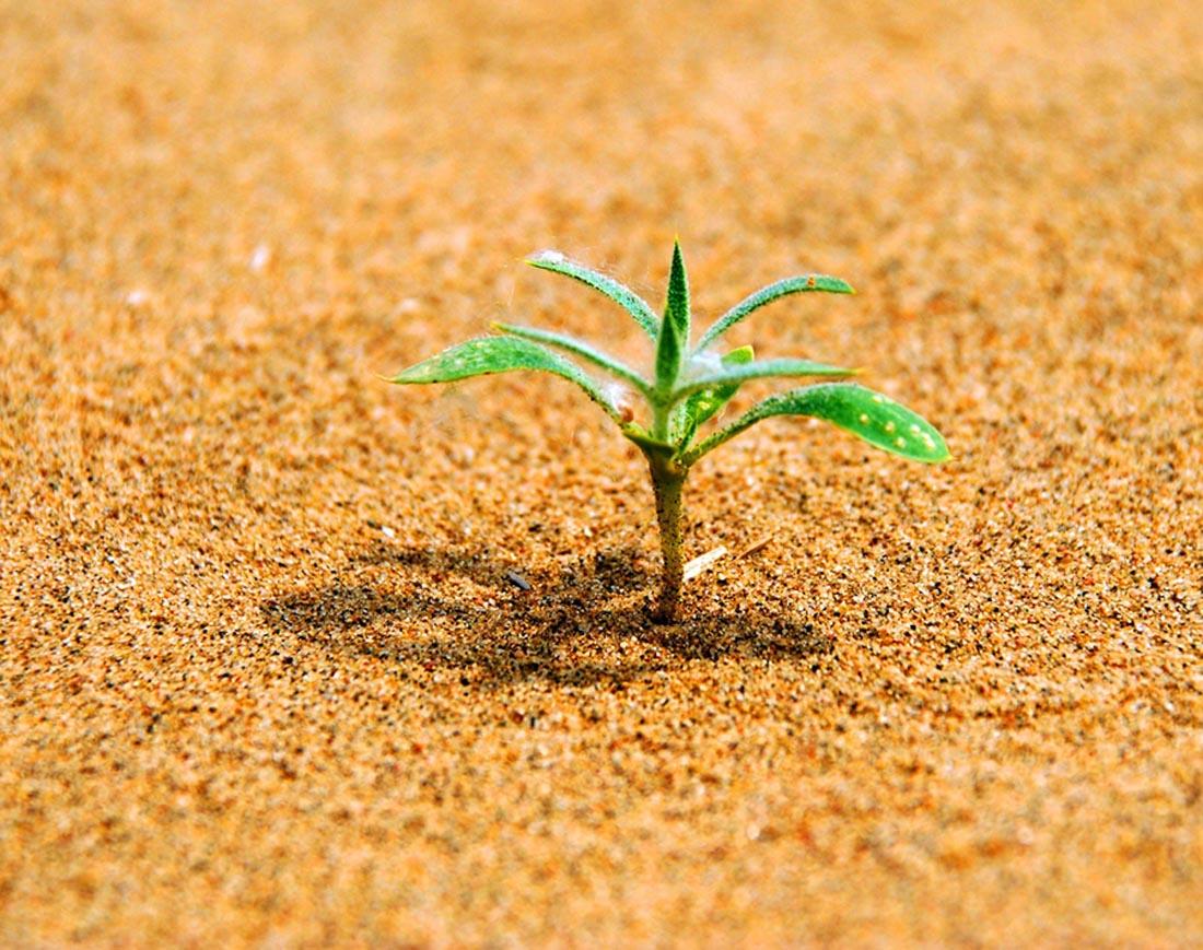炫光智影作品:沙漠绿芽