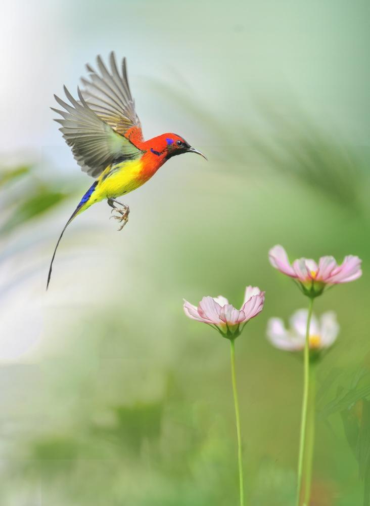 盛世太平2作品:太阳鸟