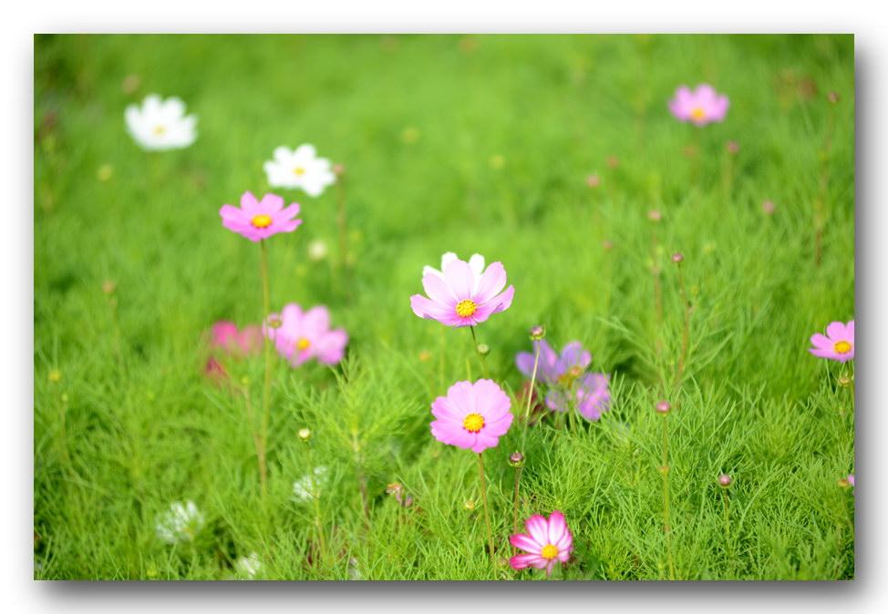 何影作品:花卉小品