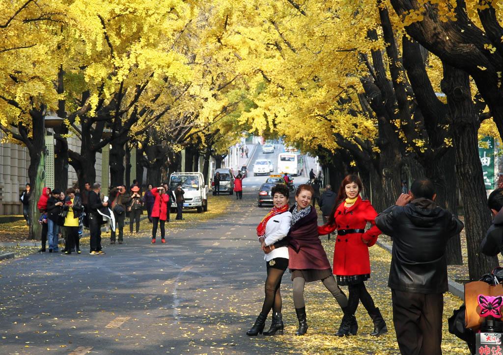 市九纬路街道,秋天,满街的银杏树叶一片金黄,吸引和很多市民在